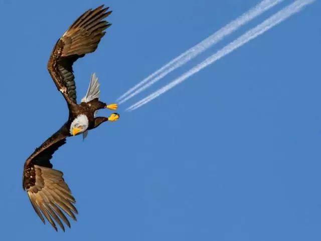 膨脹的翅膀
