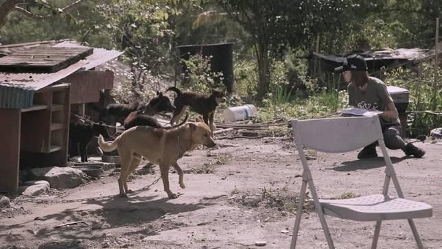 教育大家如何辨別結紮過的狗狗
